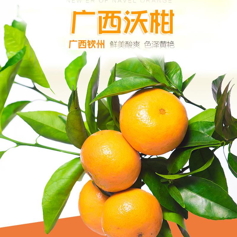 灵山冬甜沃柑 6斤 礼品装大果75-85mm