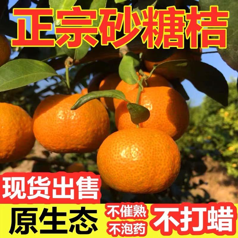 广西 砂糖桔 5斤精选