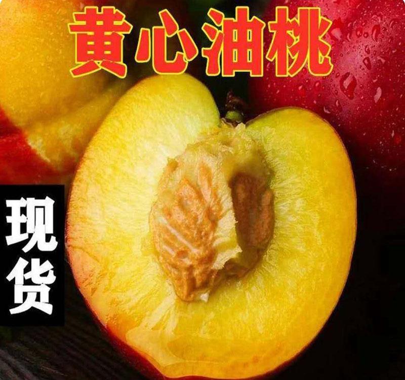 黄心油桃2.jpg