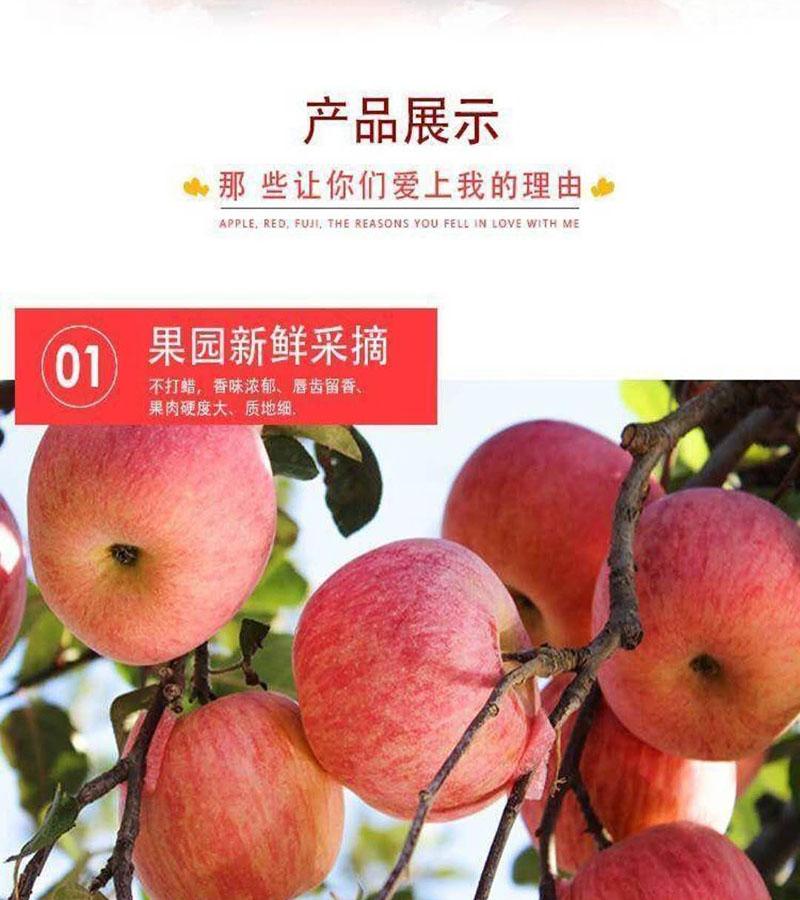 c红富士苹果3.jpg