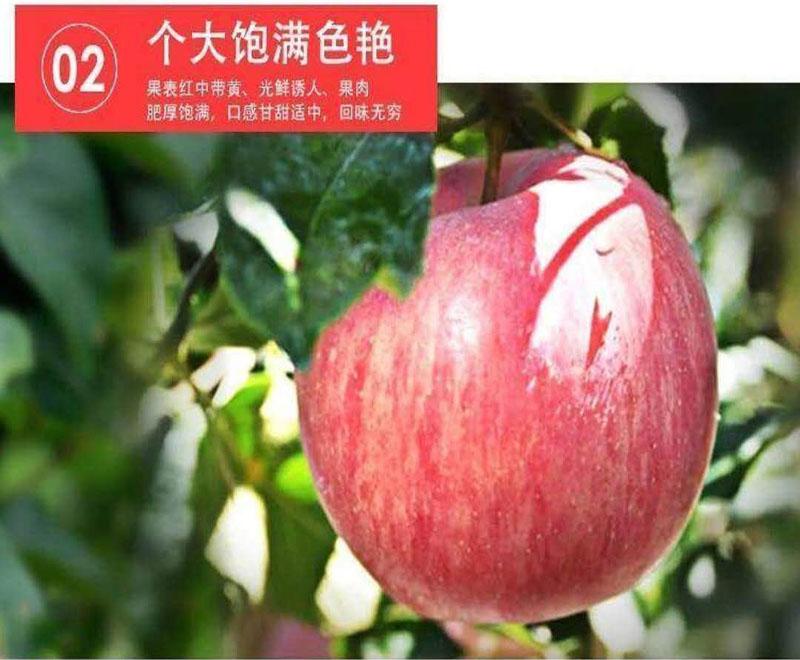 c红富士苹果4.jpg