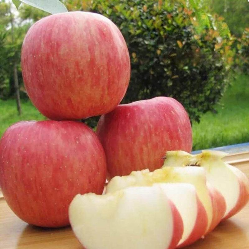 c红富士苹果6.jpg