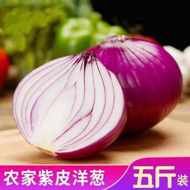 河南 精选紫皮洋葱 5斤